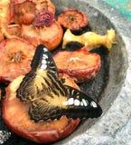 果子吸引的一只五颜六色的蝴蝶 库存图片