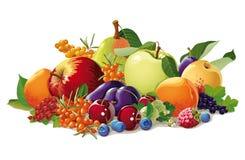 果子和浆果静物画  库存照片