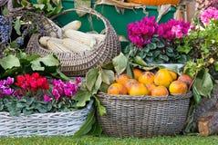 果子和花的构成 库存照片