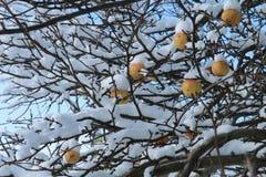 果子在冬天 免版税库存照片