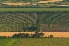 果子庭院 动画片调遣绿色例证样式 农业横向 库存照片