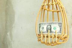 果子捡取器和钞票场面 免版税库存照片