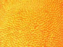 果子插孔皮肤 库存图片
