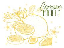 果子柠檬手拉的剪影 例证百合红色样式葡萄酒 在白色背景的种族分界线 也corel凹道例证向量 免版税库存图片