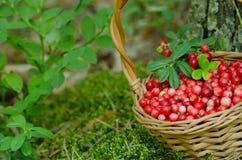 果子森林(莓果)篮子的 免版税库存照片