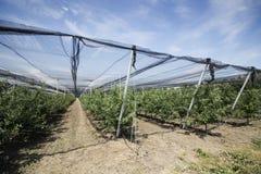 果子温室 免版税库存图片