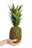 果子现有量藏品菠萝 图库摄影