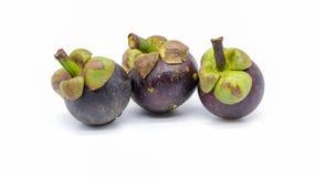 果子的女王/王后是在泰国找到的山竹果树 免版税库存照片