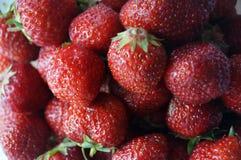 果子红色成熟草莓 免版税库存照片