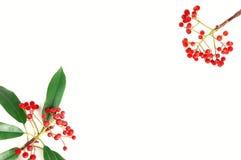 果子红色 免版税库存图片