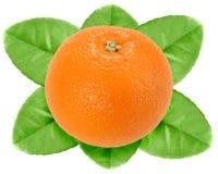 果子绿色叶子一桔子 免版税库存图片