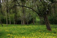 果子老果树园春天 库存图片