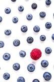 果子背景,区别概念 免版税库存照片