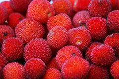 果子草莓树 库存照片