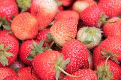 果子草莓 库存图片