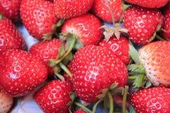 果子草莓 免版税库存图片