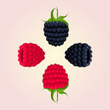 果子莓和黑莓 免版税库存图片