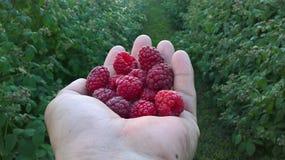 果子莓茶点 免版税库存图片