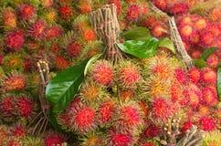 果子长毛的红毛丹 库存图片