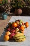 果子静物画与阳光的 免版税库存图片