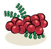 果子,蔓越桔 库存例证