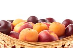 果子 杏子、油桃和李子 免版税库存图片