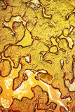 果子黏浆状物质在显微镜下 库存照片