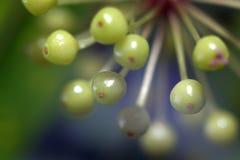 果子 图库摄影