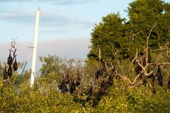 果实蝙蝠和游艇帆柱 库存照片