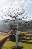 果树保护与石灰油漆 免版税库存图片
