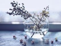 果树分支在一个玻璃花瓶的在窗口 免版税库存照片