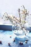 果树分支在一个玻璃花瓶的在窗口 库存图片