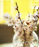 果树分支在一个玻璃花瓶的在窗口 图库摄影