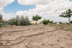 果树和床在白色土壤浇灌了与特别灌溉系统 库存照片