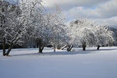 果树园冬天 免版税库存图片
