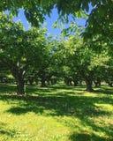 果树园和草甸在清楚的蓝天下 库存图片