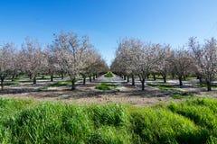 果树园在加利福尼亚 免版税库存照片