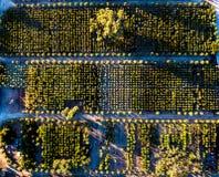 果树园在北加利福尼亚 图库摄影