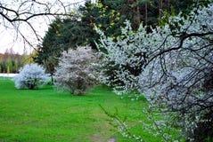 果树园在早期的春天 库存图片