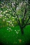 果树园春天 免版税库存图片