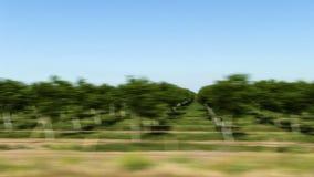 果树园树然后犁了从移动的汽车的领域 股票视频