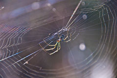 果树园蜘蛛 免版税库存照片