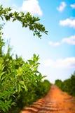 果树园路径 免版税库存照片