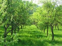 果树园 图库摄影