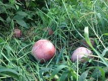果树园 免版税图库摄影