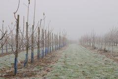冻结果树园 图库摄影