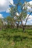 果树园 免版税库存图片