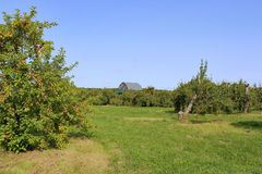 果树园 库存照片