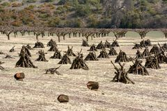 果树园withits果树的风景cutted 库存照片