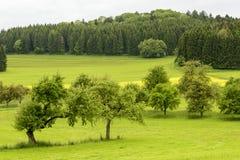 果树在绿色乡下, Baden Wuttenberg,德国 库存图片